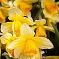 Spring Blooms 6739 by Timothy Bischoff