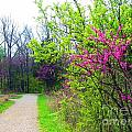 Spring Blooms Along The Path by Matthew Peek