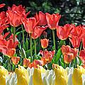 Spring Blooms by Debra  Miller