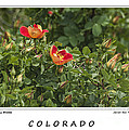 Spring Blooms In Colorado by Janice Pariza