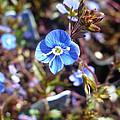 Spring Blooms Of 2013 F by Nicki Bennett