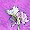 Spring Blossom by Gena Weiser