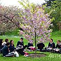 Spring Blossom In Kew Gardens London by David Cairns