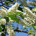 Spring Blossom by Lena Photo Art