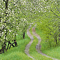 Spring Blossom Road by Alan L Graham
