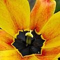 Spring Blossom Sbp by Jim Brage