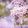 Spring Blossoms by Cathy Kovarik
