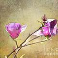 Spring Blossoms - Digital Sketch by TN Fairey