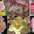 Spring Blossoms by Dora Sofia Caputo Photographic Design and Fine Art