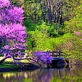 Spring Blossoms On Lake Marmo by John Absher