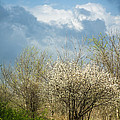 Spring Blossoms Storm Approaching by Imagery by Charly