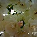 Spring Blossoms by Susan Garren