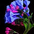 Spring Bluebells by John Absher