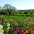 Spring Bouquet At Rusack Vineyards by Kurt Van Wagner