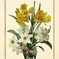 Spring Bouquet Of Daffodils And Narcissus With Butterfly Vertical by Elaine Plesser