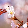 Spring Breeze by Alexander Senin