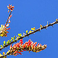 Spring Buds 32815 by Jerry Sodorff