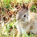 Spring Bunny by Diane Alexander