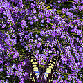 Spring Butterfly by Garry Gay