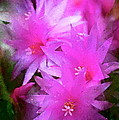 Spring Cactus by Pamela Cooper