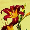 Spring Candor by Sonali Gangane