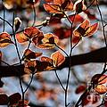 Spring Canopy by Kenny Glotfelty