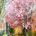 Spring - Cherry Tree By Brick House by Susan Savad