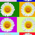 Spring Collage by Kasia Bitner