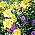 Spring Colors by Lauren Nicholson