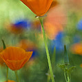 Spring Colors  by Saija  Lehtonen