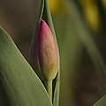 Spring Comes Softly by Penny Meyers