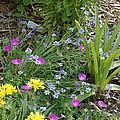 Spring Cottage Garden by Jessica Ristau