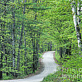 Spring Country Road by Alan L Graham