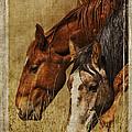 Spring Creek Basin Wild Horses by Priscilla Burgers