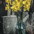 Spring Daffodil Flowers by Edward Fielding