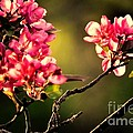 Spring Dance by Tami Quigley