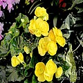 Spring Delight In Yellow by Luther Fine Art