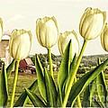 Spring Down On The Farm by Edward Fielding