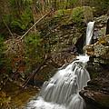 Spring Falls by Karol Livote