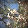 Spring Fancies 5 by Annie Adkins