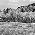 Spring Farm Landscape With Dandelions In Maine by Keith Webber Jr
