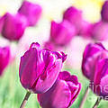 Spring Fever II by Angela Doelling AD DESIGN Photo and PhotoArt