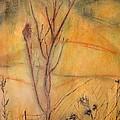 Spring Fields by Ian  MacDonald