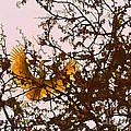 Spring Flight by Melinda Hughes-Berland