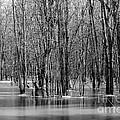 Spring Flooding by Sophie Vigneault