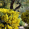 Spring Flora by Deb Halloran
