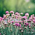 Spring Floral Background by Mythja  Photography