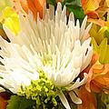 Spring Floral Burst by Amy Vangsgard