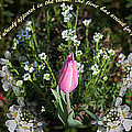 Spring Flower Pano by Cheryl Mills