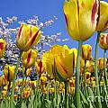 Spring Flowers 12 by Arterra Picture Library